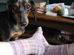 Jackson & Socks 2