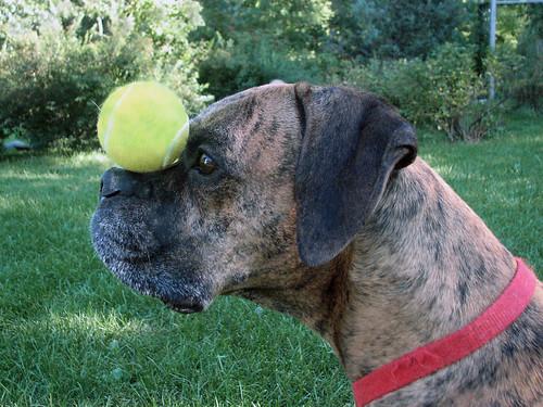 Dog vs Ball by rgdaniel.