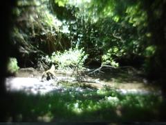 La nature dans son plus simple appareil n°DSC09013