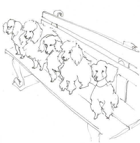 Poodle sketch.