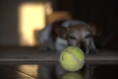Ball and dog