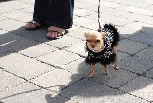 Is this Paris's dog?