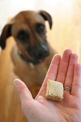 Dog begging for her cookie