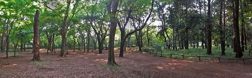 Inokashira park forest