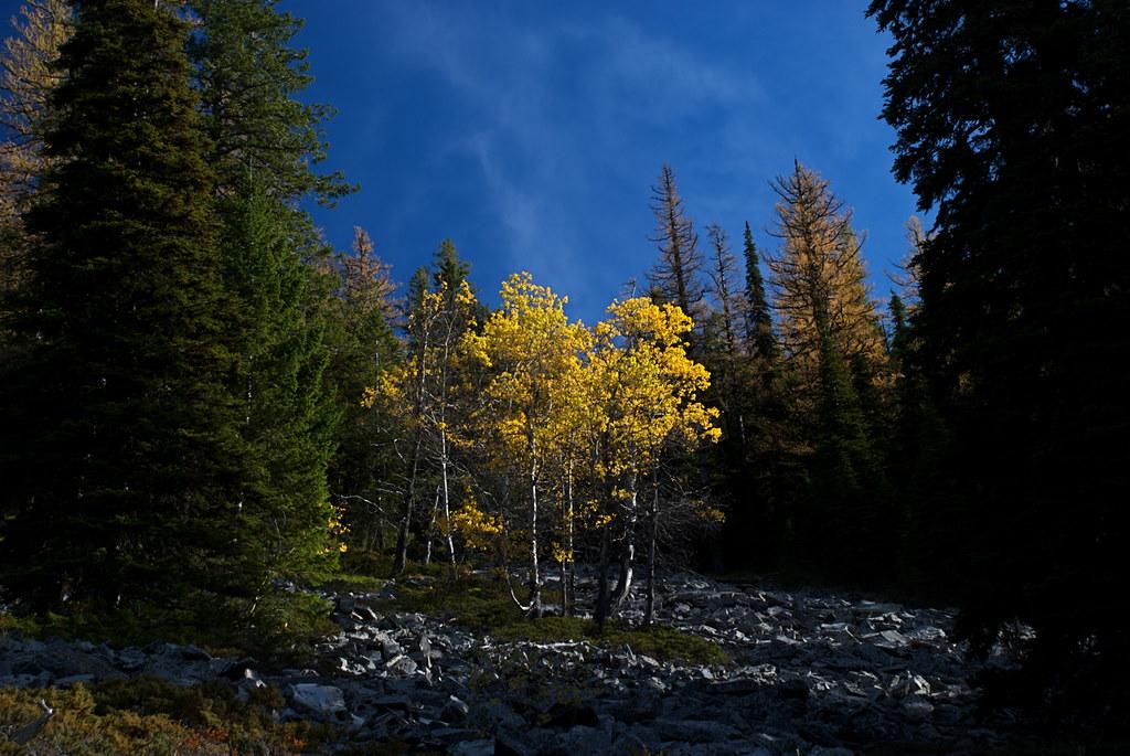 Trail to Cherry Peak