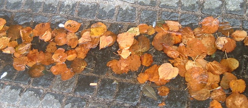 Puddled Leaves 1