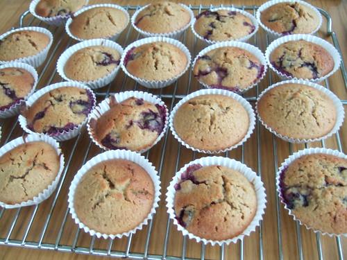 bluberrymuffins.JPG