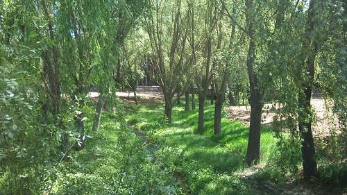 Parque Forestal de somosaguas