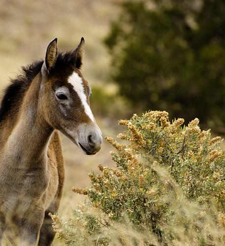 NM Wild Horses (58) nwm