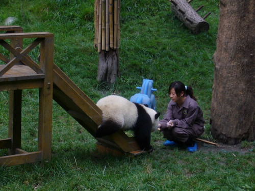 Panda cub done with slide