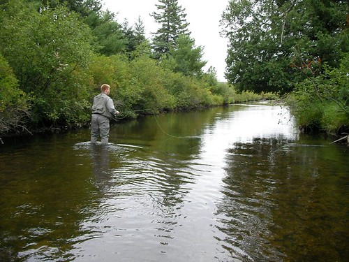 Fly Fishing on a stream