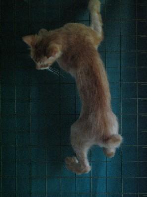 GingerLongHairedBro_20070922_17x