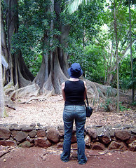 Allerton Garden - Contemplating the Morton Bay Fig Tree