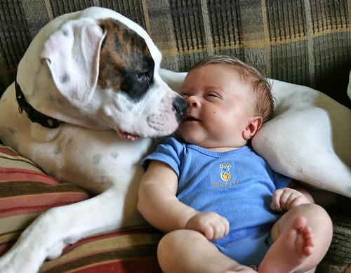 Puppy Love por antsypantsy.