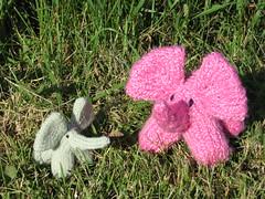 knit elephant duo