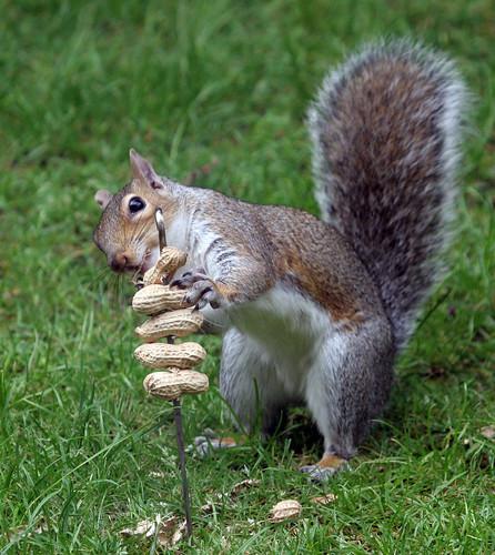 """squirreling"""