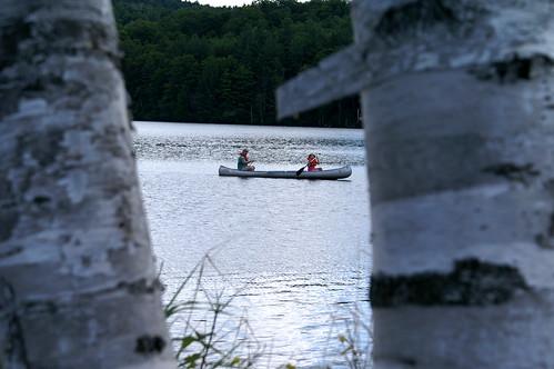 canoetrees