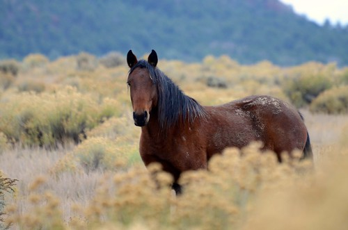 NM Wild Horses nwm (38)