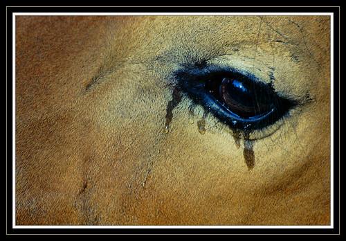 Solitude Tears