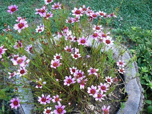 stump planter w/ flowers