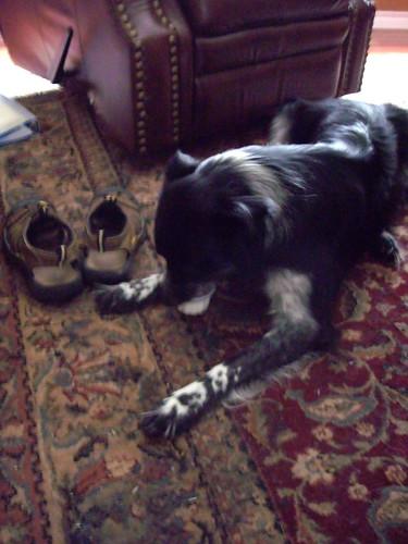 Zeus enjoying his Dog-Zert