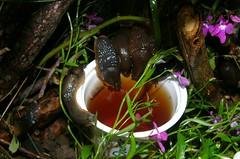 slugbeer