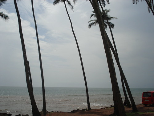 trees @ anjuna beach