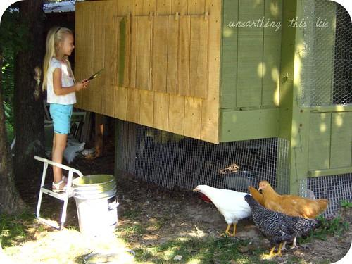 curious chicks