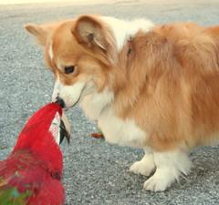 i give u a kiss my rani love