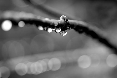 Black and white rainbokeh