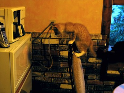 LOLcat with microwave