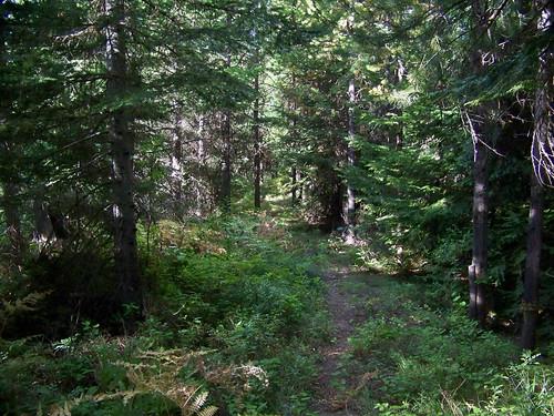 Along Trail 345W