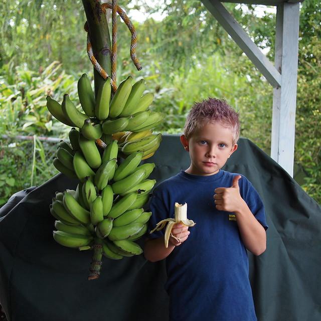 Banana Taste Test #4