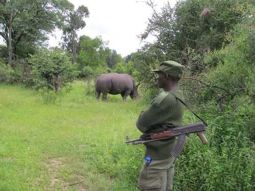 24 hour armed guard over rhinos in a Zambian park