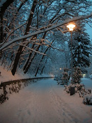 Winter evening in a park