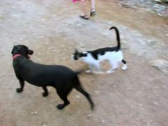 cat-dog / dog-cat