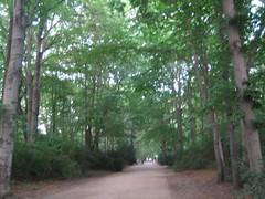 Path in Tiergarten