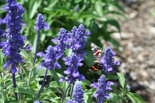 Purple Flowers & Butterfly