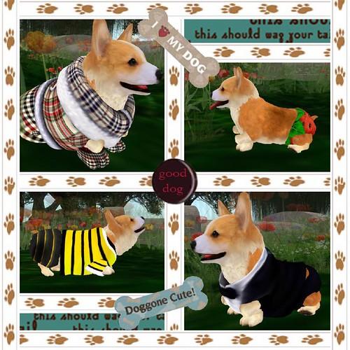 Dulce the Canine Fashionista