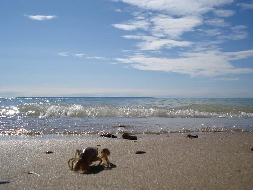 Crayfish-eye view of Lake Michigan