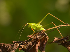 Bug Guy!
