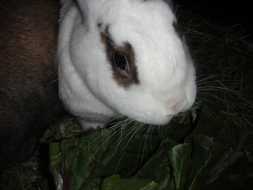 Whiskers and Chard