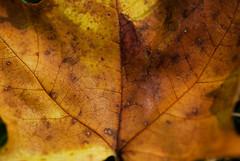 oh look, it's autumn