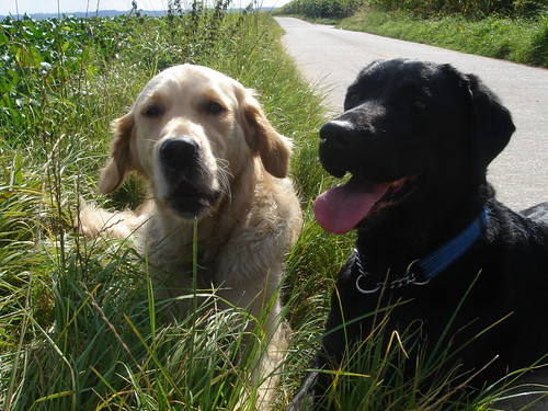 Valéas and Eiko
