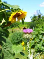 (c) Hilltown Families - Noho Community Gardens