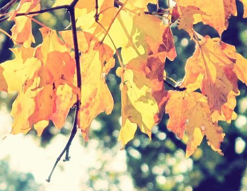 Autumn Xpro