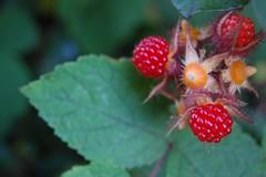strawberry or raspberry?