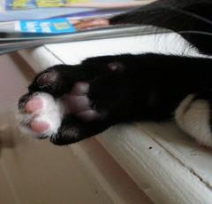 Honey toes