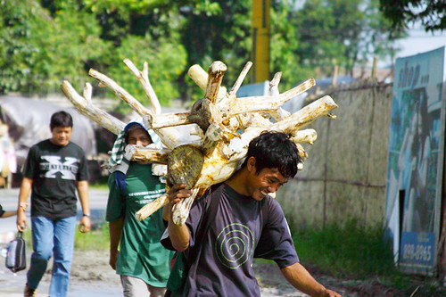Marikina man carrying a part of a tree Buhay Pinoy Philippines Filipino Pilipino  people pictures photos life Philippinen