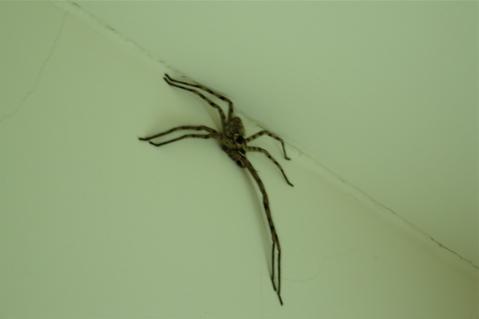 spiderone.jpg
